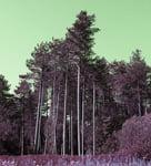 Pembrey Woods